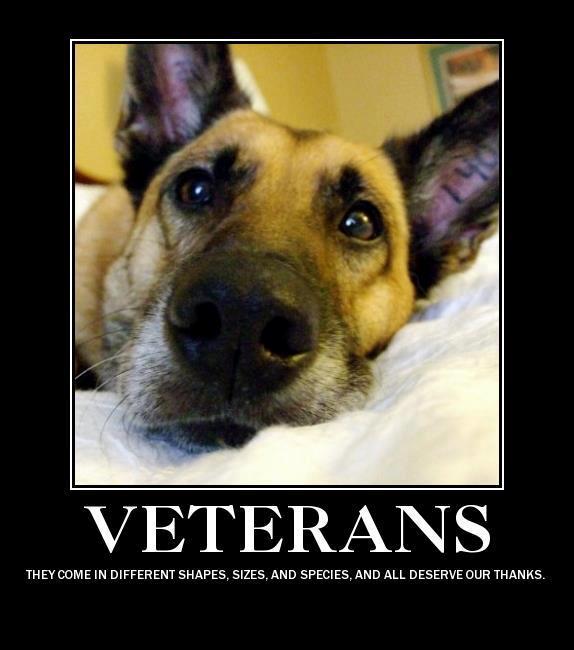 Military Dogs | andyoaklee AvidAmerican